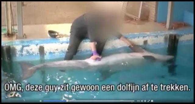 DolfijnAftrekken